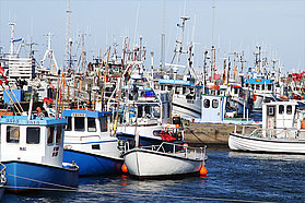 The local fishing fleet