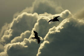 Seaguls in the clouds