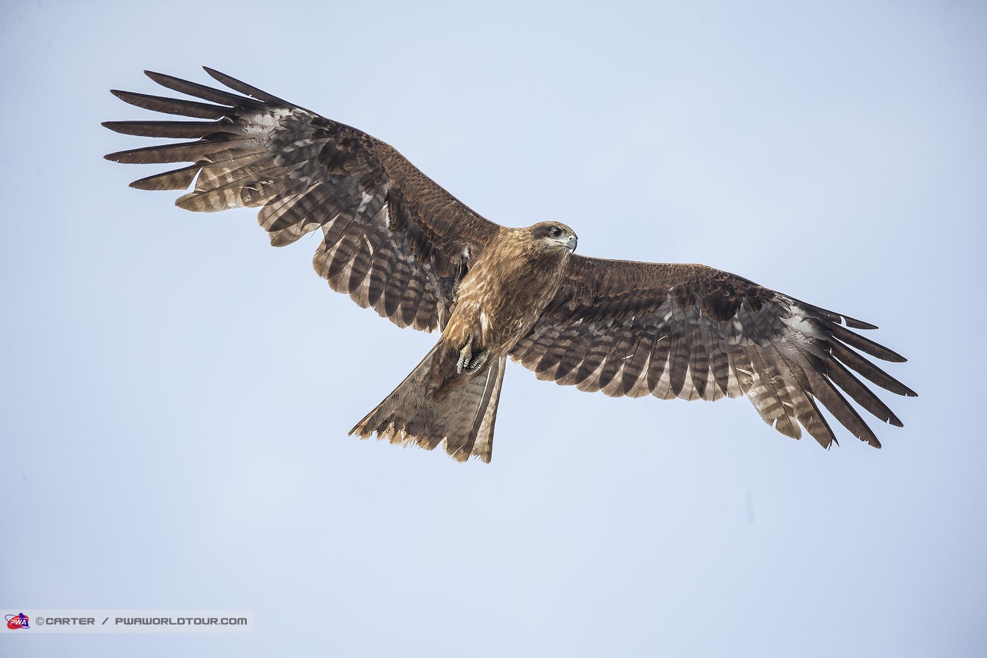 JP19_ls_Eagle_flyover.jpg